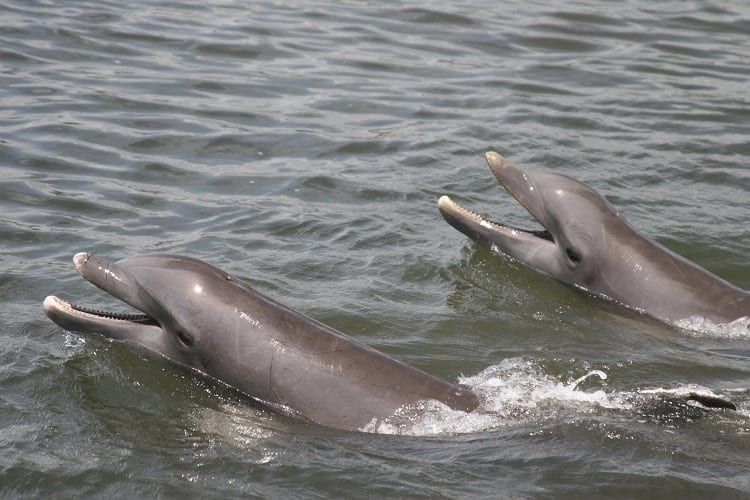 Faqs About Cape Coral Dolphins Nightlife Boating