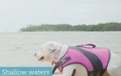 Pet Friendly Beaches in Southwest Florida